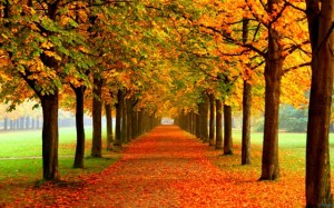 tumblr_static_autumn_leaves_on_road-2560x1600-640x400