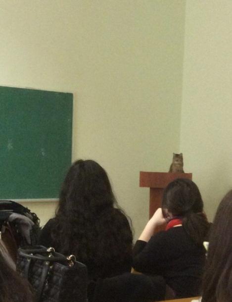 uFjw2qm7QC2nI2CjzKIu_Cat Lecture